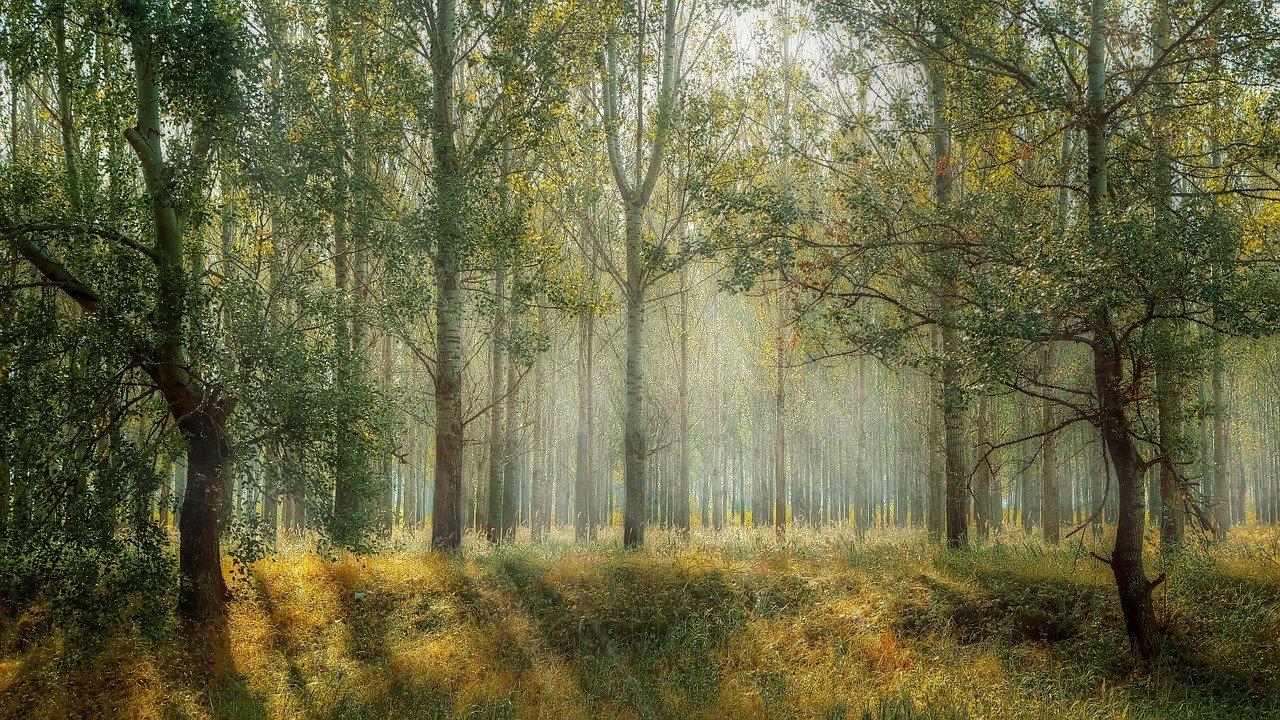 Priroda šuma