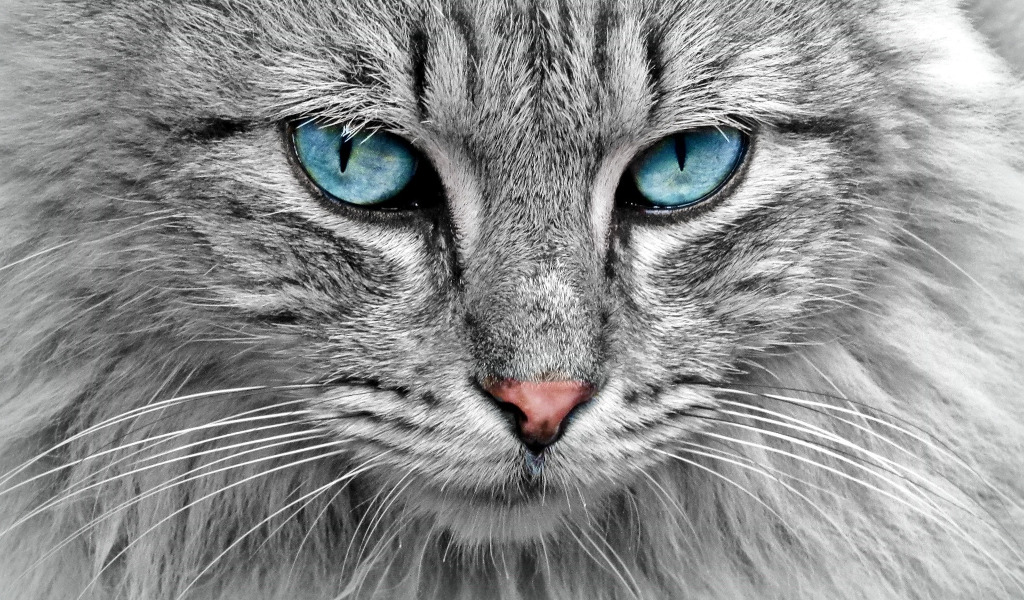 Mačak